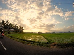 Magical Ricefields