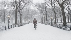 The Messenger (ShutterJack) Tags: road street nyc winter white snow newyork lamp bike bicycle nikon ride path centralpark messenger themall literarywalk blanketofsnow jameshale jimhale shutterjack
