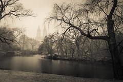 Central Park, NYC (nianci pan) Tags: park nyc newyorkcity bridge winter blackandwhite bw mist lake snow plant newyork tree rain fog river landscape pond scenery centralpark manhattan sony rainy pan curve sonyalphadslr nianci sonyphotographing