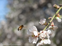 Bee (bashar_jn) Tags: camera blue people art plane canon photography photo photographer post pentax palestine powershot bee p beatiful portriat natuer canonphoto pwoershot canon700d canoneos700d