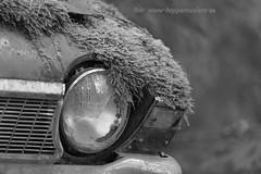 20160203089763 (koppomcolors) Tags: old cars car forest vintage sweden skog bil sverige veteran vrmland gammal bilar varmland bstns koppomcolors