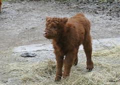 29-geb.14.02. (TiGa-Nbg) Tags: charlotte polarbear vera tiergarten nrnberg