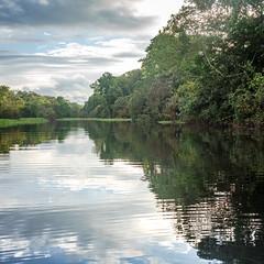 Reflection Panorama (MudflapDC) Tags: travel cruise vacation panorama reflection peru water rain clouds river amazon jungle pe loreto excursion pacayasamirianationalreserve delfinii