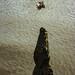Jumpng Saltwater Crocs, Adelaide River