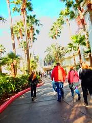 Flamingo - Harrah's, Las Vegas (Andrew Milligan Sumo) Tags: lasvegas flamingoharrahs
