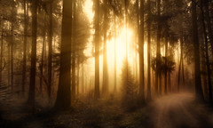 Misty Forest (Chrisnaton) Tags: wood trees sun nature fairytale forest wald sunbeams morningsun herecomesthesun mistyforest foresttrail foggyforest hrstwald