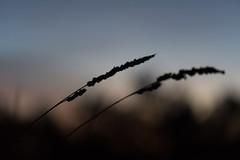 Challenger Deep (Mathias Bra) Tags: naturaleza amanecer silueta
