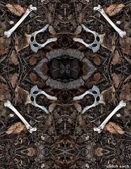 Knochenspiegelung 1 (Weinstckle) Tags: laub spiegelung knochen tierknochen