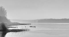 Morgenstimmung (Wunderlich, Olga) Tags: nature landscape deutschland wasser nebel insel ufer rgen landschaft strelasund vorpommern kste mecklenburgvorpommern landscapephotography naturfotografie naturfoto inselrgen landschaftsfotografie naturefoto grahlhof nebelstimmung