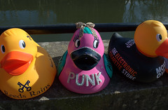 Dressed up ducks for the Ramsbottom Ruck Race 2016 - 1 (Tony Worrall Foto) Tags: county uk england game silly race fun duck costume cool stream tour open place northwest display unitedkingdom many painted country north group ducks competition visit location lancashire plastic area sunlit northern update daft duckrace attraction lancs ramsbottom coolducks welovethenorth