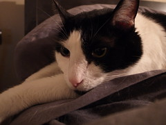 R0011494 (colette_noir) Tags: monochrome kitty grdiii
