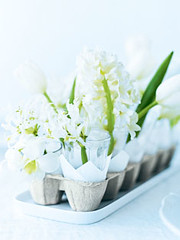 Spring Egg Carton (Heath & the B.L.T. boys) Tags: egg eggcarton flowers tray diy spring