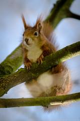 SLR_0181.jpg (tamahandy) Tags: germany de bayern flickr critter nrnberg stadtpark