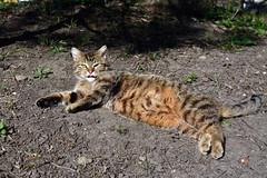DSC_7933 (Kira Pichano) Tags: mountains tourism fauna del cat montagne de des gato caucasus leisure katze turismo gatto ocio montaas kuban kaukasus caucaso cucaso freizeittourismus