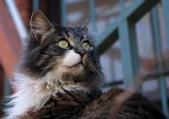 hermosa (nailkrmzgl) Tags: beauty look cat istanbul gato mirada estética losojos bakış belezza canon70d