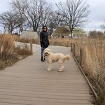 Lincoln Park Nature Boardwalk, Christmas Day, 2015 thumbnail