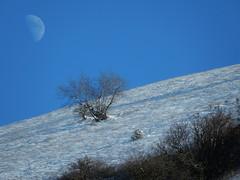 metafisica naturale (daniele ideale costanzo) Tags: luna neve albero inverno umbria montesubasio