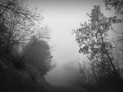 anomalie di primavera (fotomie2009) Tags: bw mist verde monochrome misty fog monocromo driving liguria monotone bn nebbia ontheroad conca savona