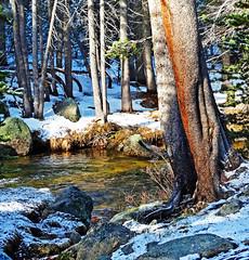 New Sun on New Snow, Tuolumne River, Yosemite 5-15 (inkknife_2000 (6.5 million views +)) Tags: california usa mountains creek landscapes spring rocks yosemitenationalpark tuolumnemeadows tuolumneriver easternsierranevadas mosscoveredrocks snowonground babblingwater dgrahamphoto