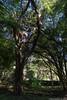 flavio-27032016-003 (MetalFlavio) Tags: casa dia tanguá