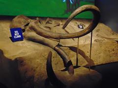 Keep off the dead things (Hydra5) Tags: mammothsandmastodons ontariosciencecentre prehistoric