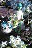 A little fairy has come to play (Jemjoop Blythe/BJD) Tags: bjd ciaobella skyblue bambicrony fairyelfkiera