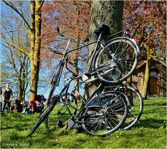 Stacked Up (Hindrik S) Tags: street people tree green bike bicycle hoop three groen space sony crowd streetphotography boom stack beam tamron heap fiets leeuwarden straat a57 2015 liwwadden bult ljouwert grien straatfotografie koningsdag tamron1750 sonyalpha tamronspaf1750mmf28xrdiiildasphericalif fyts sonyphotographing strjitte kh2018 slta57 57