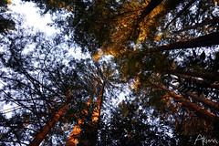 _AKU7081 (Large) (akunamatata) Tags: california sunset berkeley miller trail joaquin joachim