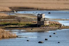 Bunkeflo Strandngar (Hkan Dahlstrm) Tags: sea photography se skne sweden coastline cropped malm f71 resund 2016 skneln bunkeflostrand bunkeflo vster strandngar xe2 xc50230mmf4567ois sek 8711042016173934