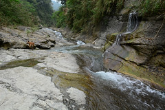 Tigger Exploring (Bob Hawley) Tags: pets mountains dogs nature water forest outdoors asia taiwan ou rivers streams nikon1755f28 yunlincounty nikond7100 taiwantugou qingshuiriver