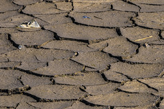 tidal river bed (HHH Honey) Tags: macro landscape spring mud dry coastal devon riverbed mudflats 32 tidalriver rivertaw horseyisland sony70300g sonya7rii 116picturesin2016 32dry minimoonxi horseysands pillsmouth