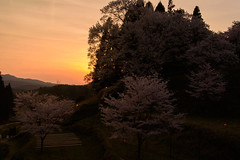 39Butsuryuji Temple (anglo10) Tags: sunset japan cherry temple