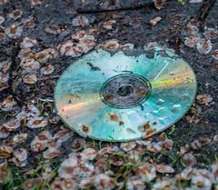 CD Blue's. (Omygodtom) Tags: park abstract nature dvd nikon dof natural cd perspective science d7100 nikon70300mmvrlens