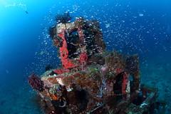 Summit (Randi Ang) Tags: bali canon indonesia photography eos underwater angle pyramid wide dive scuba diving fisheye ang 15mm randi 6d amed