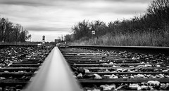 A Different Perspective (Chris Liszak Photography) Tags: blackandwhite bw train wow photo ant small perspective tracks sharp tiny stunning nikond3200 chrisliszakphotography