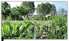 questione di pov (gneopompeo) Tags: primavera pov