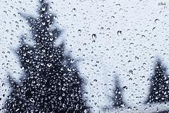 Agua, fuente de vida (chyky9) Tags: winter wild naturaleza cold tree water frozen agua nikon nieve invierno fro nikond3200 nikonistas