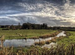 Sheep near Titchbourne, Hampshire (neilalderney123) Tags: rural river landscape sheep winchester tichbourne 2016neilhoward 2016neilhoward