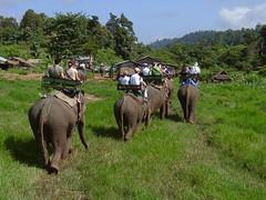 20040920-09200043 (Sebastian Vazquez (svbtato@arrakis.es)) Tags: naturaleza fauna viajes thailandia