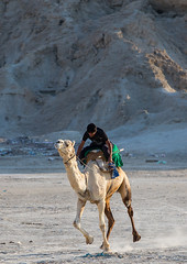 a man racing a camel during a traditional wedding, Qeshm Island, Salakh, Iran (Eric Lafforgue) Tags: travel wedding people man men animal vertical race outdoors photography amusement persian asia desert iran muslim islam traditional ceremony culture traditions marriage competition persia folklore running run racing celebration riding camel jockey activity custom cultures adultsonly cultural oneperson islamic middleeastern persiangulf sunni qeshmisland menonly 20sadult youngadultman hormozgan  fulllenght onemanonly  1people  iro straitofhormuz  colourpicture  salakh camelrunning iran034i9400