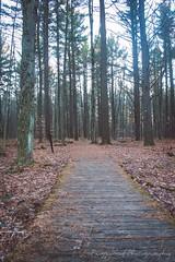 Boardwalk in Woods (Peg Skof) Tags: ontario canada leaves woods path ottawa hike boardwalk ncc