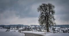 Swabian winter (wiedenmann.markus) Tags: road street winter snow tree nature germany deutschland dorf village schwaebisch zang swabian badenwuerttemberg heidenheim ostalb