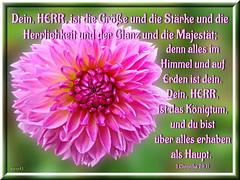 Glanz & Majestt / glory & majesty (Martin Volpert) Tags: flower fleur jesus flor pflanze bible blomma christianity blume fiore blte bibel blomster virg christus lore biblia bloem blm iek floro kwiat flos ciuri herrlichkeit bijbel kvet kukka glanz cvijet flouer glauben christentum blth cvet zieds strke is floare erhaben  blome iedas bibelverskarte mavo43 1chronicles2911 1chronika2911
