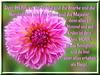 Glanz & Majestät / glory & majesty (Martin Volpert) Tags: flower fleur jesus flor pflanze bible blomma christianity blume fiore blüte bibel blomster virág christus lore biblia bloem blóm çiçek floro kwiat flos ciuri herrlichkeit bijbel kvet kukka glanz cvijet flouer glauben christentum bláth cvet zieds stärke õis floare erhaben תנך blome žiedas bibelverskarte mavo43 1chronicles2911 1chronika2911