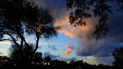 February 8th Sunset (Jim Mullhaupt) Tags: pictures camera pink blue sunset red wallpaper sky orange sun color tree weather silhouette yellow clouds landscape photography gold evening photo nikon sundown florida dusk snapshot picture palm exotic p900 tropical coolpix bradenton endofday cloudsstormssunsetssunrises nikoncoolpixp900 coolpixp900 nikonp900 jimmullhaupt