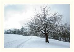 DSCF2967 (Frank Dpunkt) Tags: winter fujifilm murgtal sigma2418 s5pro