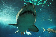 Acquario Siviglia - el tiburn (Valiena) Tags: trip travel holiday photography sevilla spain espana pesci andalusia acqua viaggio acquario vacanza spagna siviglia squalo razza
