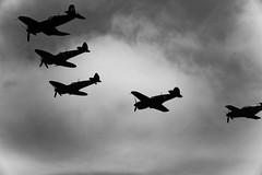 2 spitfires kittyhawke mustang corsair Tyabb Airshow (lindsayholley) Tags: blackwhite nikon war airshow corsair d750 guns spitfire mustang rockets bombs cannons firepower tyabb kittyhawke