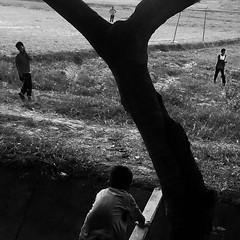 Daily Life - Kedah (Chot Touch) Tags: tree kids children blackwhite football streetphotography malaysia padi kedah sawah layering monocrome bendang paddyfiled jerlun ricohgxr fotojalanan photohuntjerlun kampungtelukjamat