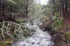 Blue Creek (rozoneill) Tags: park blue lake creek river joseph lost state hiking cove trail stewart grotto rogue shady